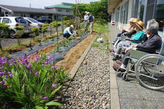 賑やかになってきたしおさいの里の畑。その隅に咲く「紫蘭」の話題で盛り上がりました!