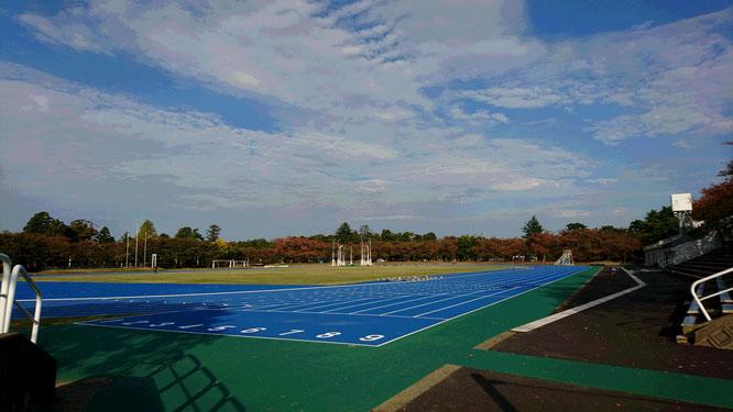 こちらは先月リニューアルされた高田公園陸上競技場。新調された青色のタータントラックに好記録が続出しそうな予感!