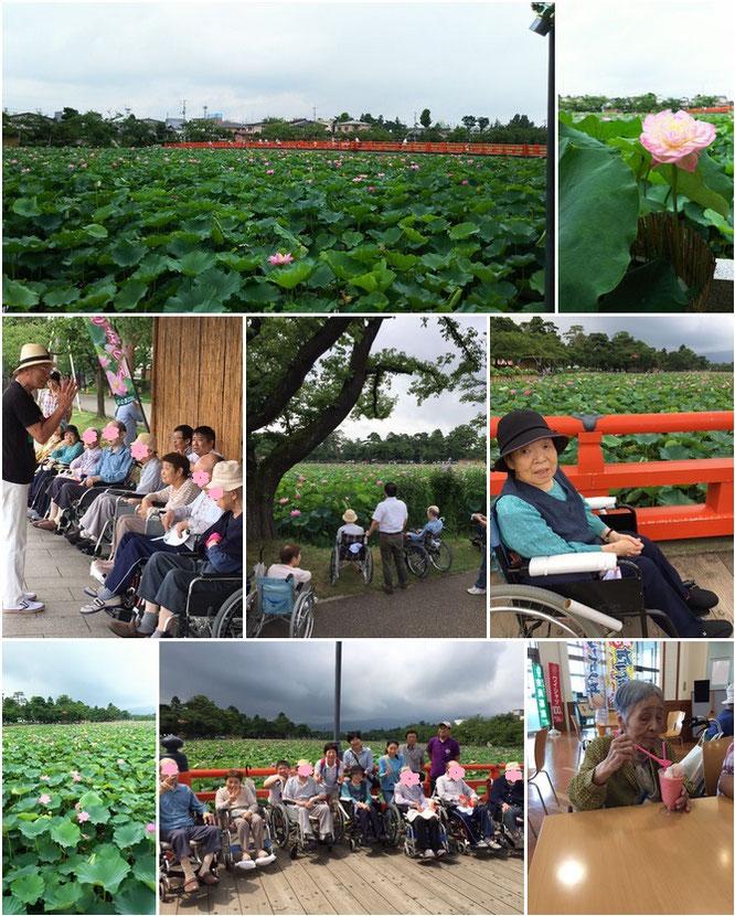 何はともあれ、お天気も味方した高田公園・蓮見学。夏のひと時を満喫しました!
