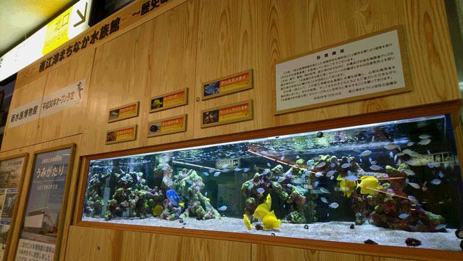 電車を見るはずでしたが、エキナカの水族館に心が奪われました