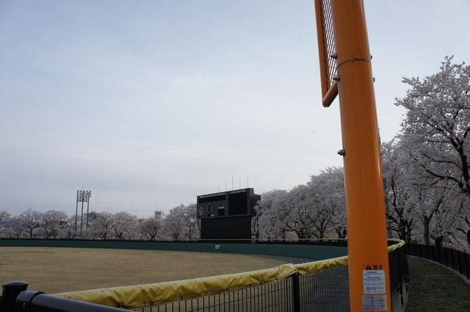 17:25 最初に向かった先は「高田公園野球場」。高校時代、この季節の練習試合は格別でした