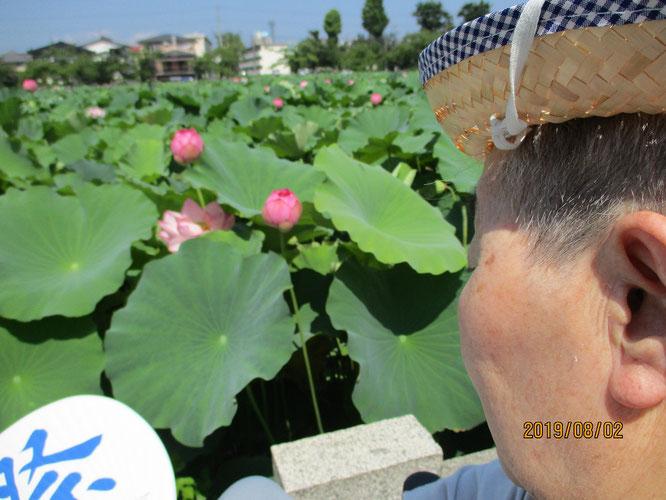夏の日差しを浴びる蓮の葉。こちらからも英気を養うKさん