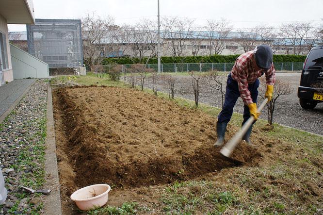 高田公園のソメイヨシノが開花した本日、明日の天候を気にかけて早めに畑の下地作業に来られたボランティアのKさん