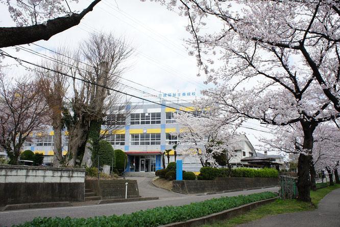 満開の桜と上越保健医療福祉専門学校。学生さん、陰ながら応援しています!