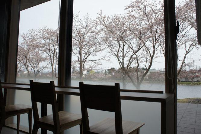 プラザ内の一角にある木製の椅子と桜並木。一日中眺めていたい、この風景