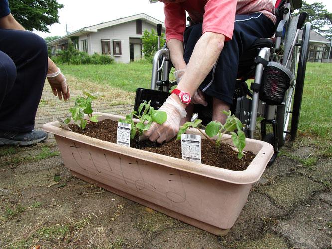 楽しみな夏。苗を植える手に、自然と力が入ります