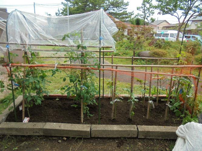 あっという間に畑の中がきれいになりました。今後の野菜の成長が楽しみです!