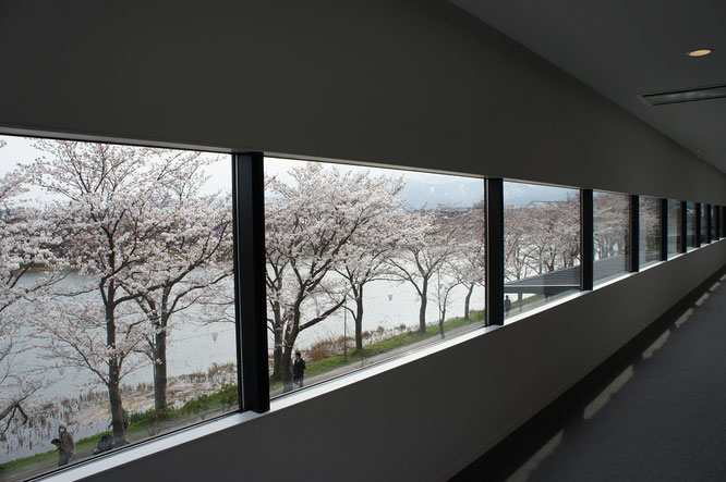 2階の廊下からの景色もまた、素敵なんです!皆さんも高田の春を感じてみませんか。見頃は今週末です!