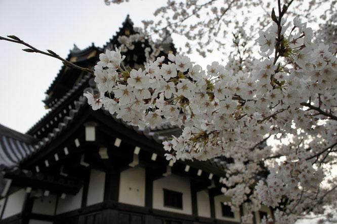 17:55 高田城三重櫓。早歩きしたため、ちょっと息切れしてきました