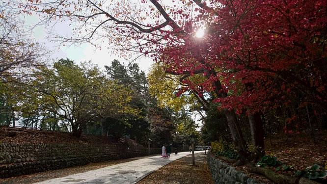 今日の新潟県護国神社の境内にて。結婚式の前撮りを行う、和装姿のご両人。小春日和と紅葉に包まれて心もほっこり!