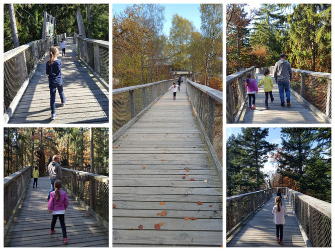 Wir laufen über den Baumwipfelpfad im Bayerischen Wald