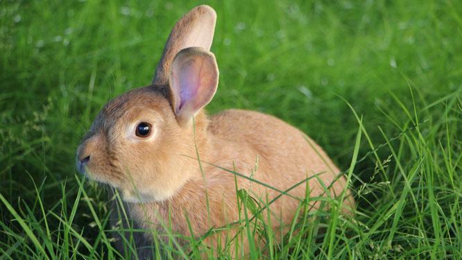 Unser Hase Paula im grünen Gras