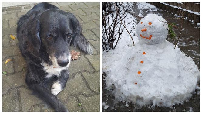 Dieses Wochenende hatten wir tierischen und winterlichen Besuch