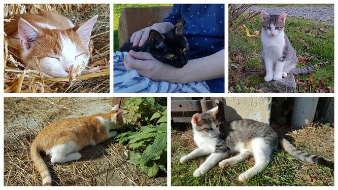 """Im Landhaus zur Ohe findet jeder """"seine"""" Katze"""