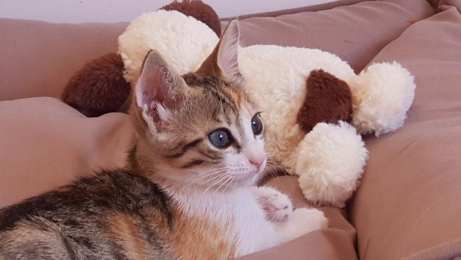 Unsere Katze: Lilli