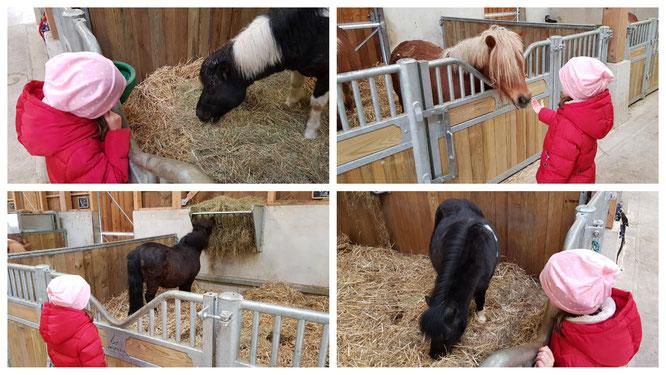 Die Ponys auf dem Ferme BelleVie im Villages Nature Paris