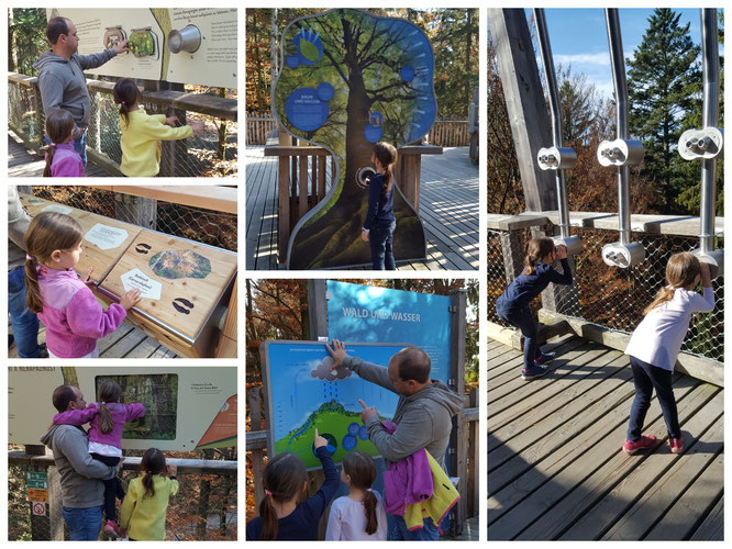 Aktionen - nicht nur für Kinder - im Baumwipfelpfad Bayerischer Wald