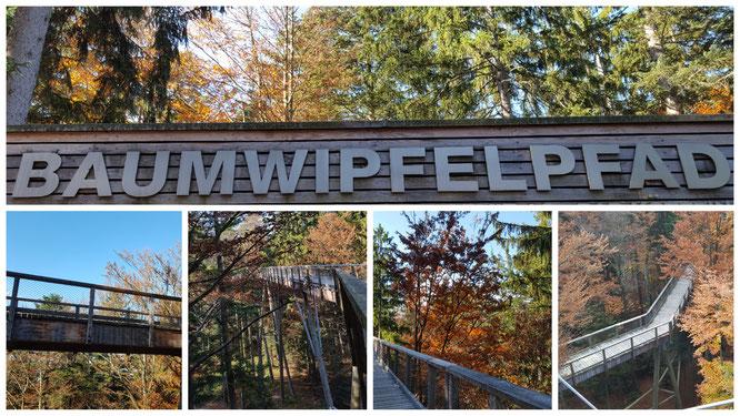 Impressionen vom Baumwipfelpfad Bayerischer Wald