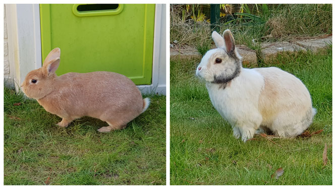 Unsere Kaninchen Max und Paula