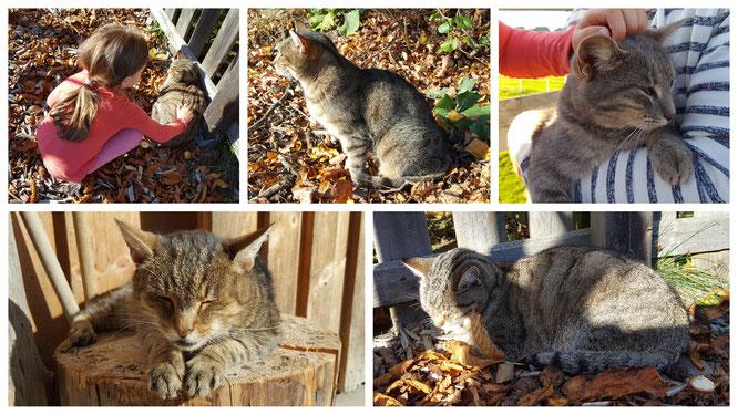 Die Katzen im Landhaus zur Ohe genießen die Streicheleinheiten der Gäste