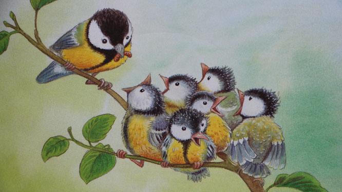 """Bild aus dem Buch """"Die kleine Meise"""" - eine Meisenmutter füttert ihre Vogelkinder"""