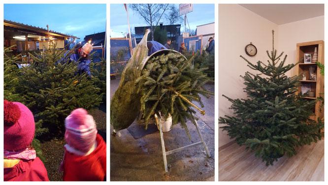 Wir suchen unseren diesjährigen Weihnachtsbaum aus