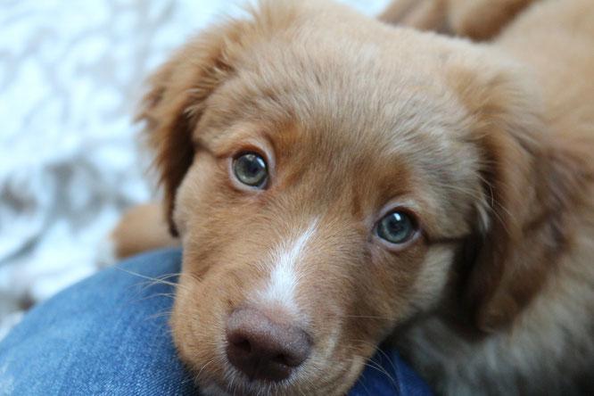 ich bin ehrlich der aller liebste Hund der Welt *Pfötchen kreuz*