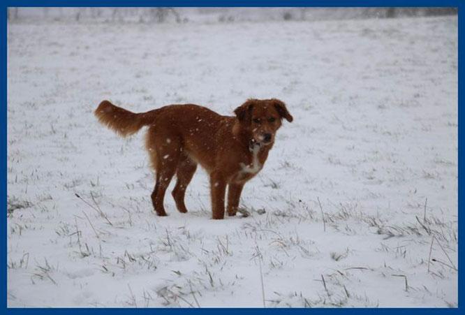 … und so ist sie Anfang Februar wiedergekommen – sie wiegt jetzt 14 kg: