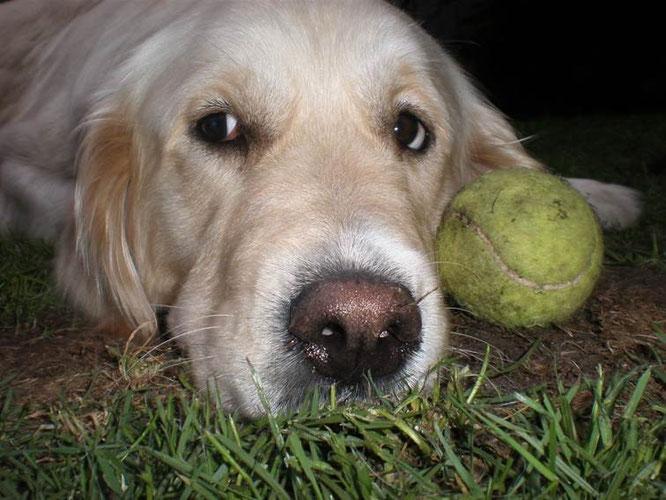 Das ist eindeutig mein Ball!!!
