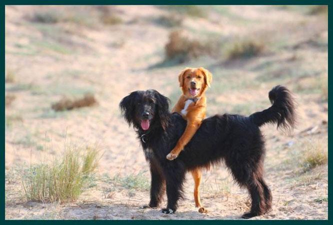 … gelernt, wie man per Hundeanhalter fährt …