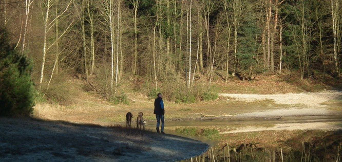 Silbersee in Heseler Wald