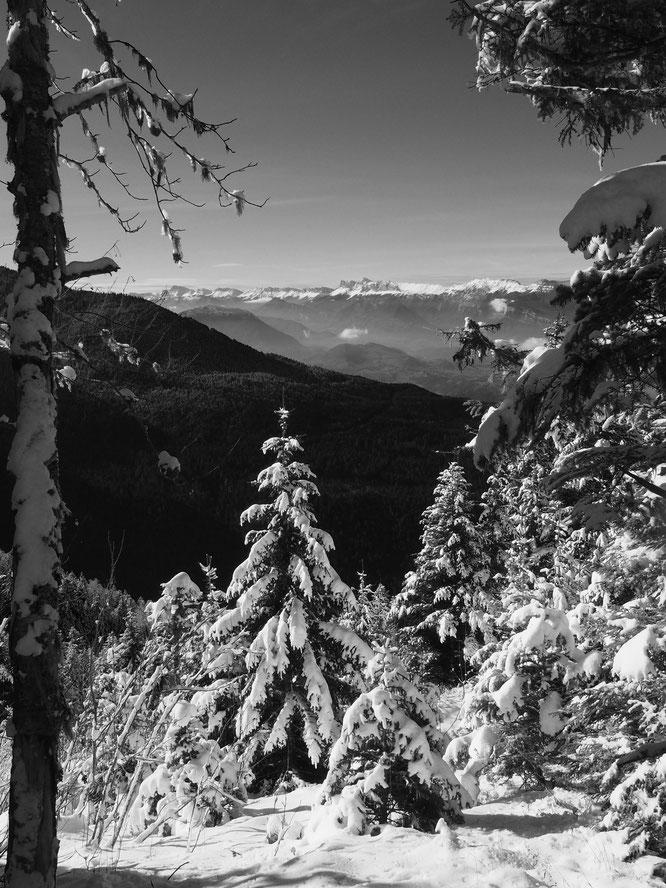 La forêt de Freydières