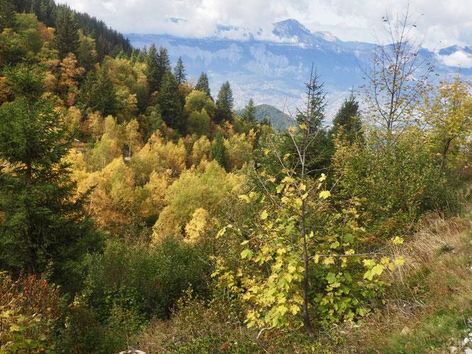 Plus bas vers 1700m en début hier d'après midi, les couleurs d'automne, de magnifiques tableaux naturels.