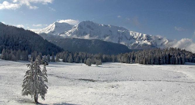 Belledonne ce matin, sans doute la dernière petite déco hivernale de la saison... ici au plateau de l'Arselle (webcam 1600m).