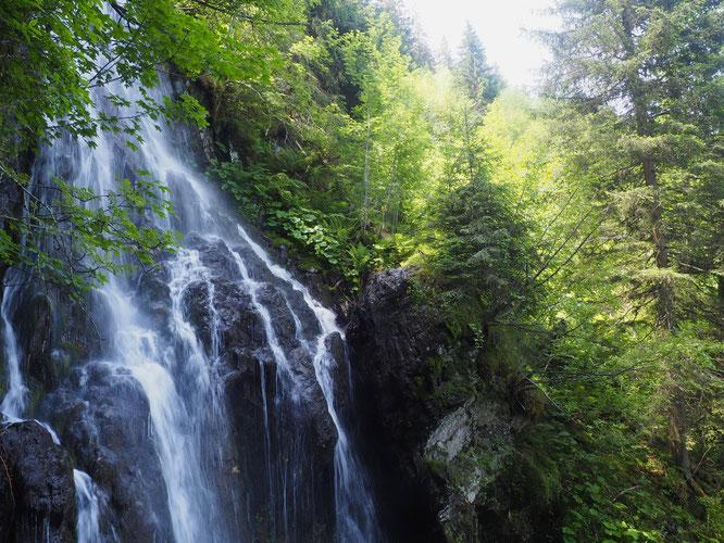 Petite balade au dessus de Freydières du coté du sentier des 3 ruisseaux (à moins d'une heure du parking): forêt et végétation denses, cascades,  petits sentiers super calmes, ambiance sauvage... c'est Belledonne ! (avec un peu de fraicheur pour Django)