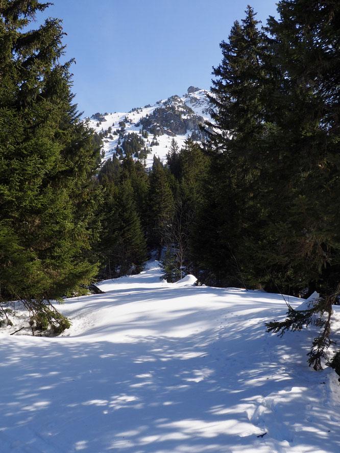 Balade hier au-dessus de Freydières, dans une belle forêt encore bien enneigée et juste au pied des montagnes de Belledonne. Ici vers 1600m (photo Frédi)