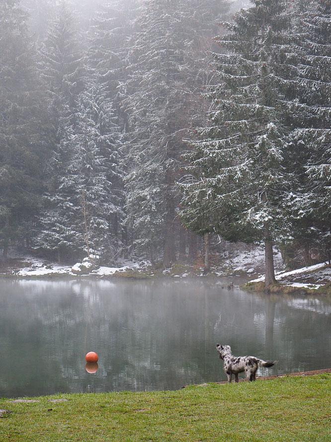 Dalva n'a pas cinq mois. Cet été elle sera aux alpages pour apprendre son travail là haut, au coté de Nathalie, la  bergère. En attendant, Dalva découvre les jeux de ballon... et le lac de Freydières !