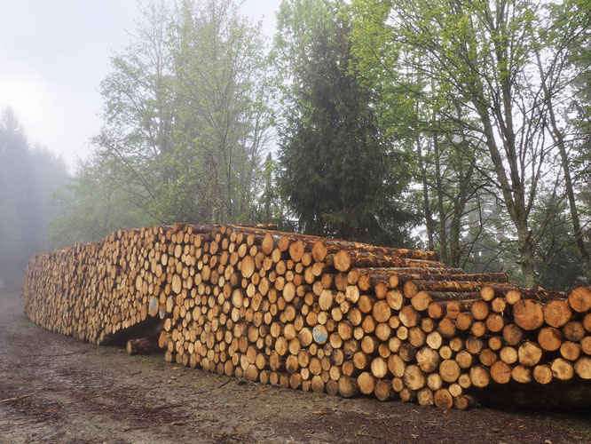 """""""Petit tas"""" de bois... dans la forêt de Freydières. Au lieu dit """"les 4 chemins"""" en montant vers le Lac du Crozet ou le grand colon."""