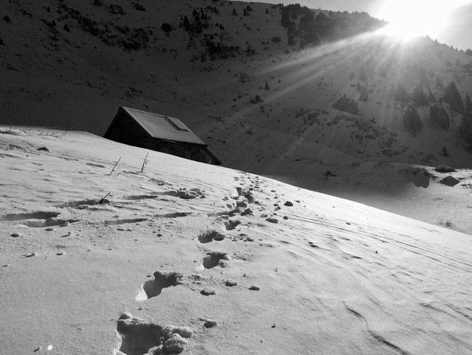 Hier à 1750m en Sud Belledonne : l'enneigement est correct (sans plus). Au premier plan il s'agit d'une accumulation formée par le vent. Ailleurs la terre, les plantes et les rochers ne sont pas bien loin sous le manteau neigeux. Photo Nath. Merci.