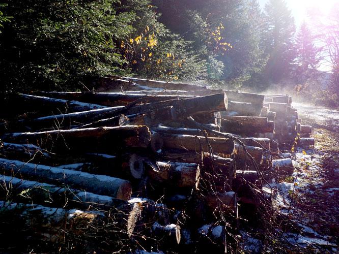 En balade ces jours ci du coté de la cabane des Carriers sur le chemin d'accès au Grand Colon (versant ouest)