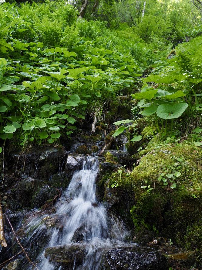 Le massif de Belledonne accueille une centaine de lacs, de beaux torrents mais aussi de petits ruisseaux. Ici, c'était jeudi matin en marchand en peu en forêt, juste au dessus de Freydières...