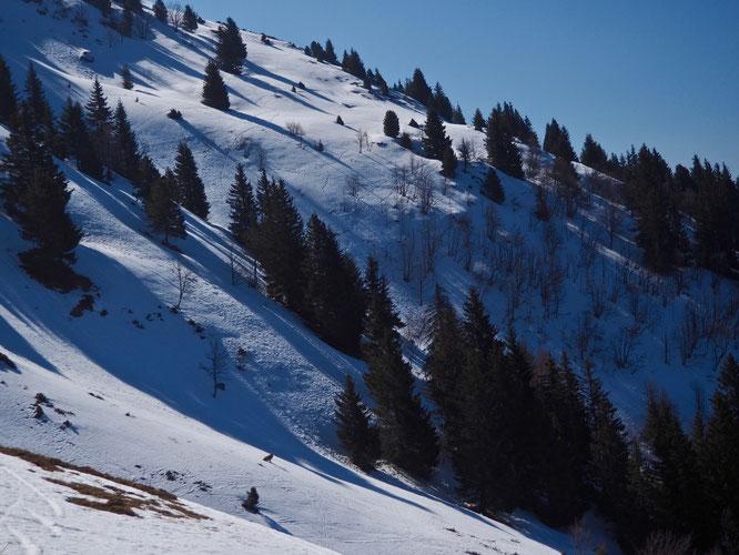 Hier vers le Grand Colon, la neige porte les traces de multiples passages des animaux de la montagne (et de quelques humains). En bas au milieu de la photo, non ce n'est pas un loup mais juste Django avec qui je suis monté là haut.