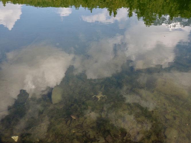 Un petit nombre de grenouilles rousses et de crapauds communs sont de retours dans les eaux du Lac de Freydières, au pied des montagnes de Belledonne.