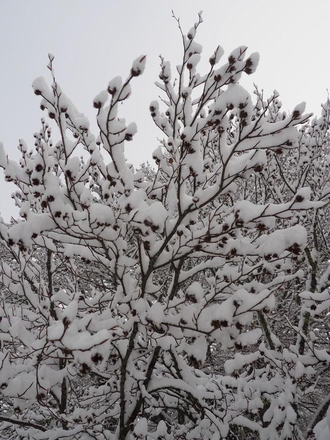 La forêt de Freydières enneigée, ce vendredi 1er janvier vers midi. Bienvenue !