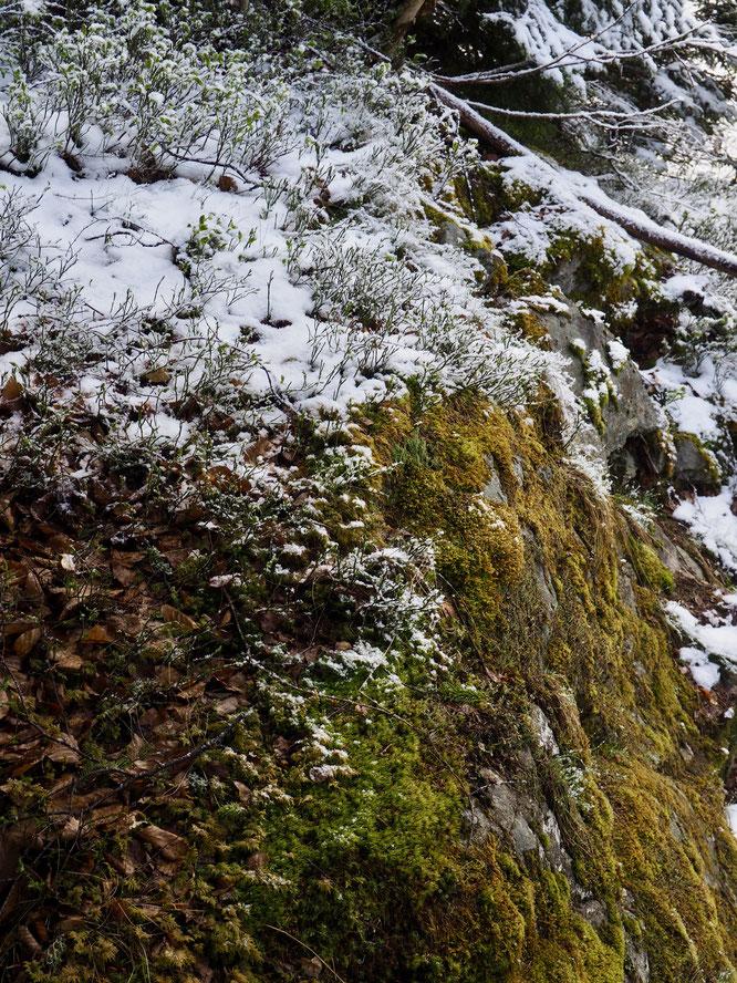 Transition hiver printemps.... hier à Freydières.
