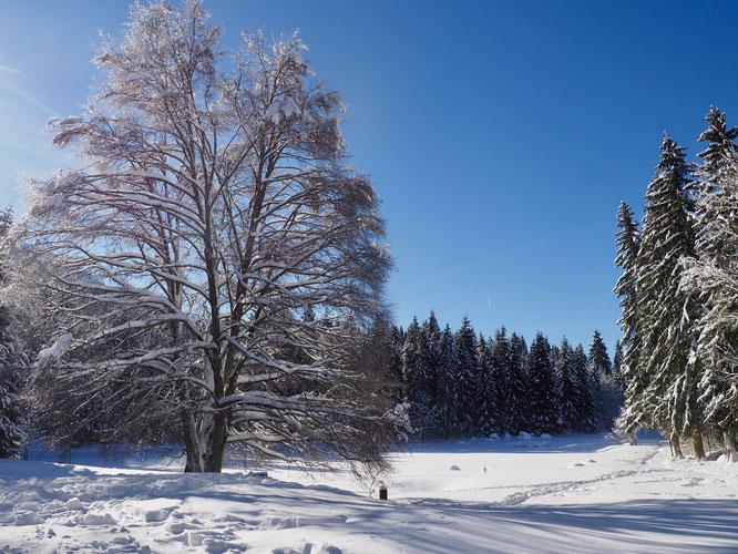 Le lac de Freydières actuellement sous la neige. La Gélinotte se situe juste au bout du lac à droite derrière les arbres.
