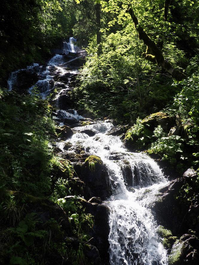 Forêt et torrent en Belledonne, au frais, juste au dessus de Freydières.