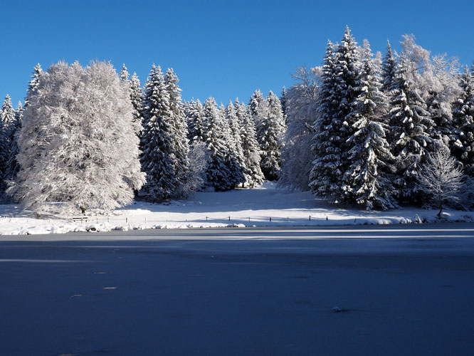 Forêt givré, lac gelé. Hier à Freydières !