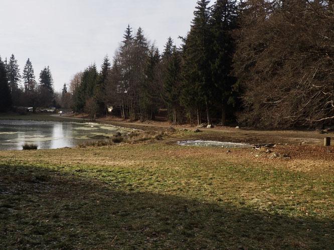 Le petit bassin creusé cet automne juste à proximité du Lac de Freydières (voir ci-dessus)