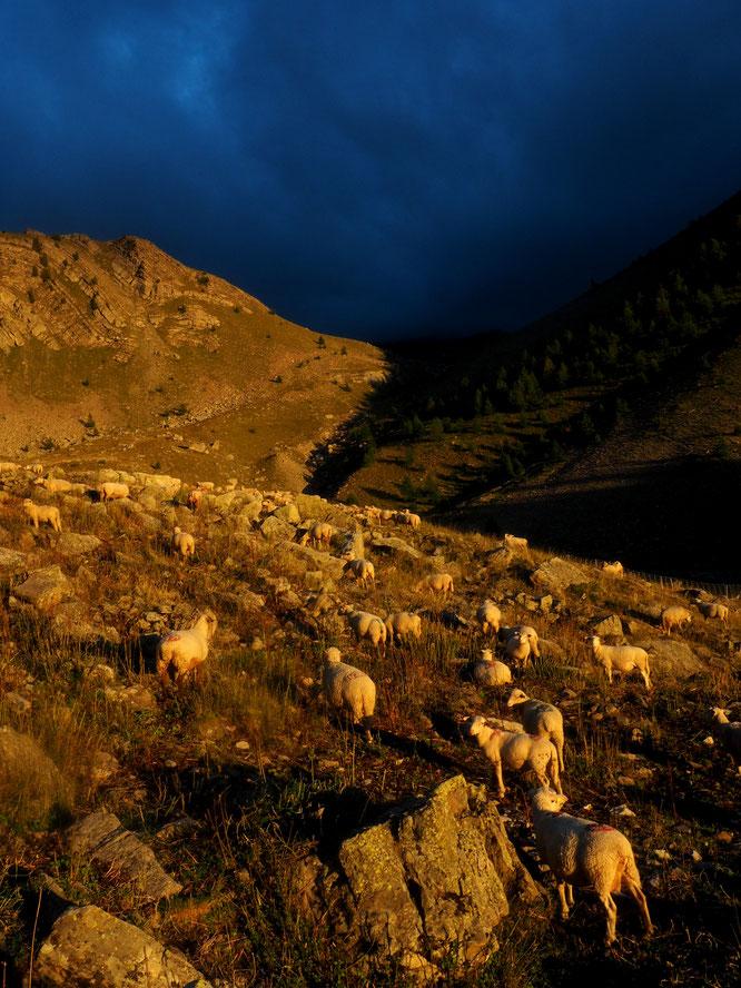 Couleurs automnales  vers 2200m Alpage de Crévoux. Photo Frédi